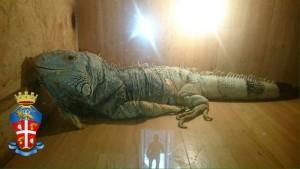 Iguana Palagianello