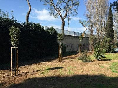 piantumazione alberi di leccio nella pineta san francesco
