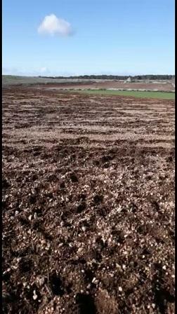 terreno distrutto dai cinghiali
