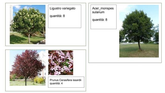 restyling via sparano - alberi scelti per incroci verdi