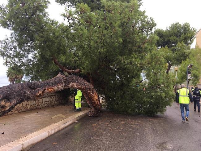 albero caduto barletta
