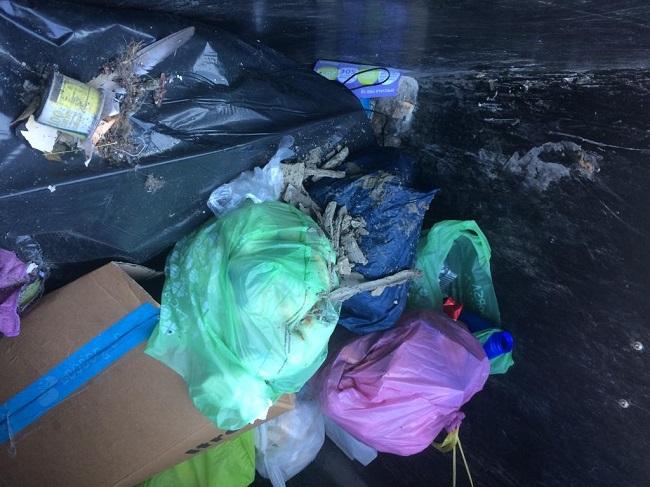 multe elevate in due giorni per errato conferimento di rifiuti e abbandono deiezioni canine