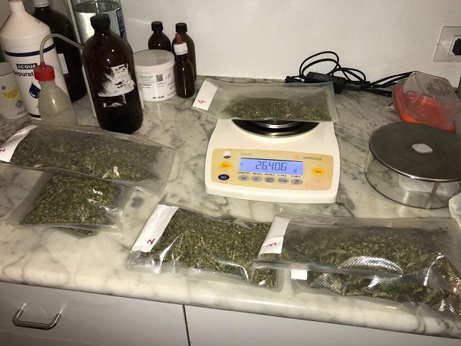 piantagione di marijuana sequestri e denuncia al campo sosta panareo