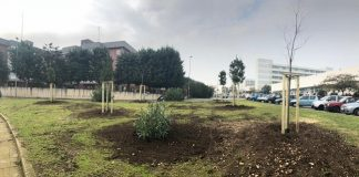 completata piantumazione 31 alberi rotatoria san paolo