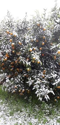 agrumi neve castellaneta
