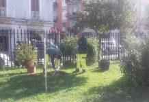 piantumazione abeti nei plessi scolastici cittadini con aree verdi