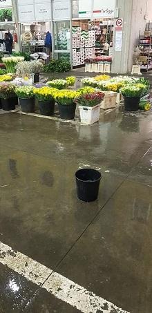 mercato dei fiori terlizzi