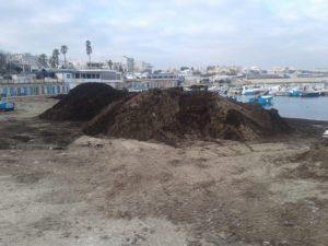 interventi di rimozione posidonia dal litorale cittadino - torre a mare oggi