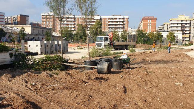 nuovi alberi e arbusti donati da confindustria giovani