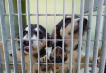 rifugio comunale per cani