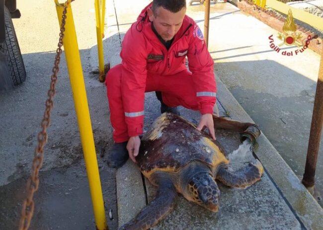 Tartaruga in vasca Petrolchimico, salvata dai vigili del fuoco a Brindisi