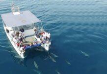 catamarano jdc con delfini da drone