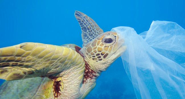 mediterraneo ed europa, il mare e la plastica cos'è la strategia marina (foto -agenzia dire)
